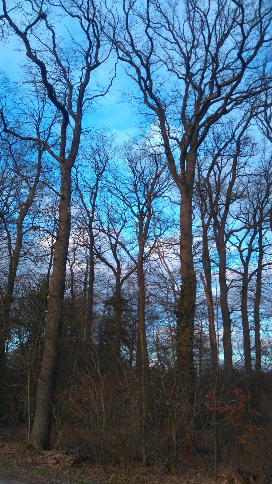 21. März 2021 ist Tag des Waldes