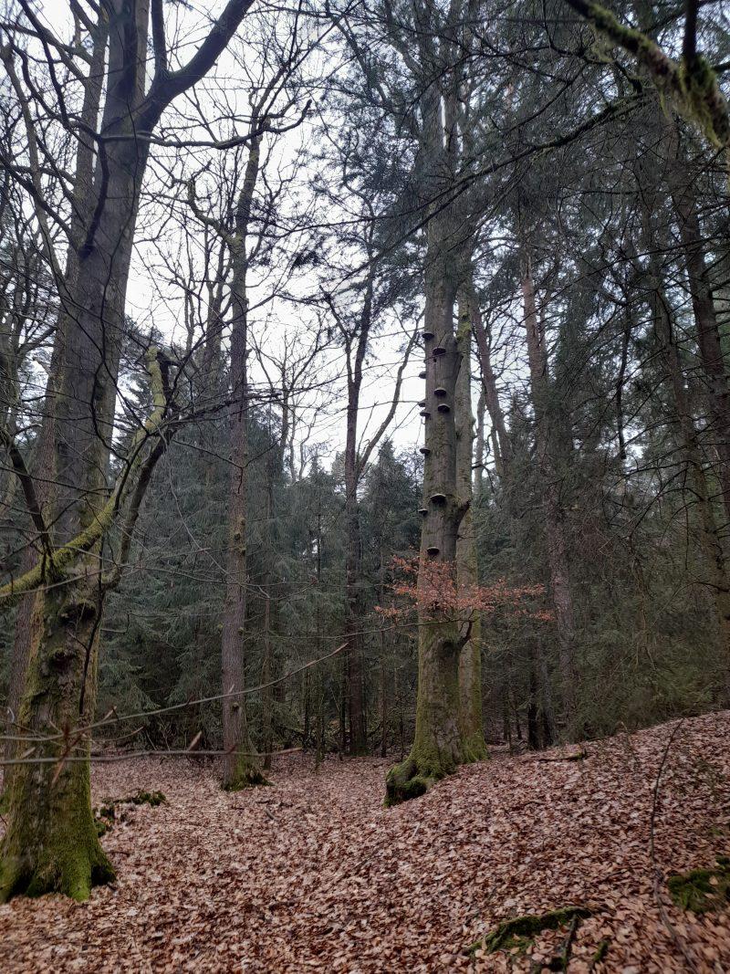 Naturwald Nds. Landesforsten